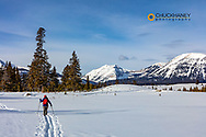Cross Country skiing on the Bighorn and Indian Creek Loop in Yellowstone National Park, Wyoming, USA  MR