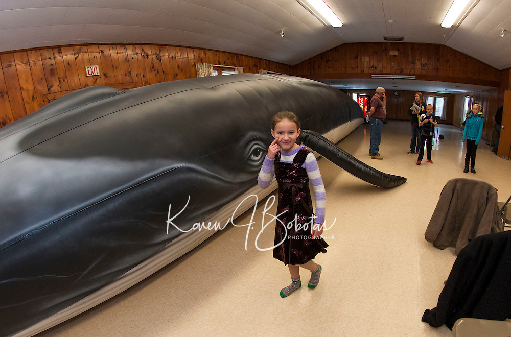 """Evelyn Smith counts the steps around """"Ladder"""" the 65 foot whale from Blue Ocean Society for Marine Conservation during a presentation by Abby Gronberg on Sunday afternoon at the Leavitt Park clubhouse.  (Karen Bobotas/for the Laconia Daily Sun)"""