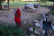 Tribal agricultural region near Kumbalgarh, SW Rajasthan