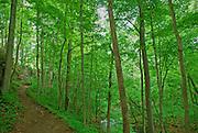 Clifton Gorge Nature Preserve, Clifton, Ohio