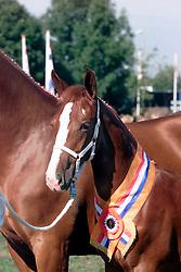 KWPN Paardendagen Ermelo 2000<br />Photo © Dirk Caremans