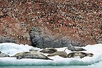 Adelie penguins (Pygoscelis adeliae) and Weddell seals (Leptonychotes weddellii) at Heroina Island.