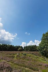 Blaricum, Noord Holland, Netherlands, Blaricummerheide