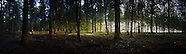 Stansted Wood