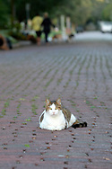 A cat sits in the middle of a street in the Mills 50 district of Orlando, Fla., Monday, Oct. 17, 2016. (Phelan M. Ebenhack via AP)