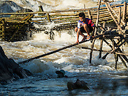 18 JUNE 2016 - DON KHONE, CHAMPASAK, LAOS: A fisherman crosses an improvised bridge over the Mekong River while checking his fish traps at Khon Pa Soi Waterfalls, on the east side of Don Khon. It's the smaller of the two waterfalls in Don Khon. Fishermen have constructed an elaborate system of rope bridges over the falls they use to get to the fish traps they set. Fishermen in the area are contending with lower yields and smaller fish, threatening their way of life. The Mekong River is one of the most biodiverse and productive rivers on Earth. It is a global hotspot for freshwater fishes: over 1,000 species have been recorded there, second only to the Amazon. The Mekong River is also the most productive inland fishery in the world. The total harvest of fish from the Mekong is approximately 2.5 million metric tons per year. By some estimates the harvest in the Tonle Sap (in Cambodia) had doubled from 1940 to 1995, but the number of people fishing the in the lake has quadrupled, so the harvest per person is cut in half. There is evidence of over fishing in the Mekong - populations of large fish have shrunk and fishermen are bringing in smaller and smaller fish.     PHOTO BY JACK KURTZ