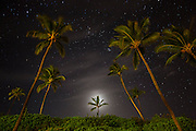 The moon glows behind a coconut palm tree (Cocos nucifera) as thousands of stars shine above Makena Beach on the island of Maui, Hawaii. Several major stars are visible in this image, including Pleiades, a tight cluster of blue stars that is visible just left of the largest palm tree on the right side of the image, and Aldebaran, a bright orange star near the top-center of the frame. Pleiades is also known as the Seven Sisters even though the cluster contains more than 1,000 stars; the nine brightest stars are named for the Seven Sisters of Greek mythology and their parents. The star cluster is one of the closest to Earth and it formed within the last 100 million years. Both Aldebaran and Pleiades are located in the constellation Taurus.