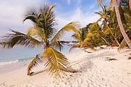Three perfect palms along the coastline of Honeymoon Bay represent an idyllic paradigm.