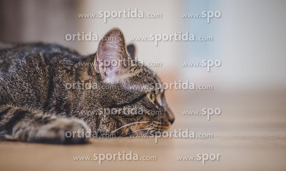 THEMENBILD - das Portrait einer getigerten Hauskatze, aufgenommen am 05. August 2018, Kaprun, Österreich // the portrait of a tabby domestic cat on 2018/08/05, Kaprun, Austria. EXPA Pictures © 2018, PhotoCredit: EXPA/ Stefanie Oberhauser