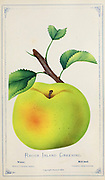 The 'Rhode Island Greening' is an American apple variety and the official fruit of the state of Rhode Island. Apple Variety from Dewey's Pocket Series ' The nurseryman's pocket specimen book : colored from nature : fruits, flowers, ornamental trees, shrubs, roses, &c by Dewey, D. M. (Dellon Marcus), 1819-1889, publisher; Mason, S.F Published in Rochester, NY by D.M. Dewey in 1872