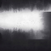 Multiple exposures of trees in fog<br /> Society6 Products: http://bit.ly/2h4XJT0<br /> Redbubble Prints & more: http://rdbl.co/2ivYPYt
