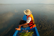 Community fishery chief Tit Rin glides through seagrass with a harvest of mangrove seeds that he has collected by boat nearby, in the bay near the village of Trapeang Ropov in Kampot Province, Cambodia. He will return to his village to plant the seedlings in the mangrove nursery that his community has set up. Mangroves are an important habitat for fish, crab and shrimp and help preserve shorelines.