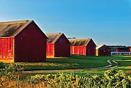 Tobacco Barns at Sunrise