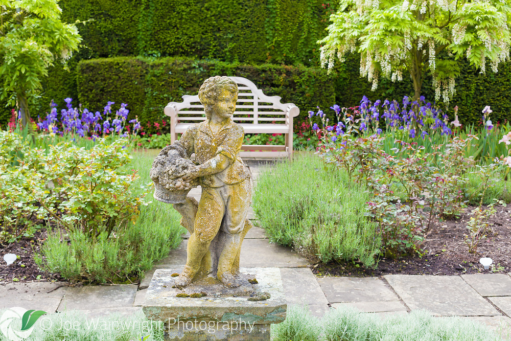 A bench in the Flag Garden at Arley Hall, is set between irises and wisteria. .  This image is available for sale for editorial purposes, please contact me for more information.