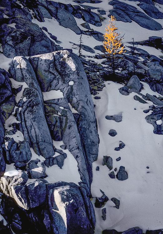 Larch tree,  granite boulders, autumn, Talisman Lake, Alpine Lakes Wilderness, Cascade Mountains, Washington, USA