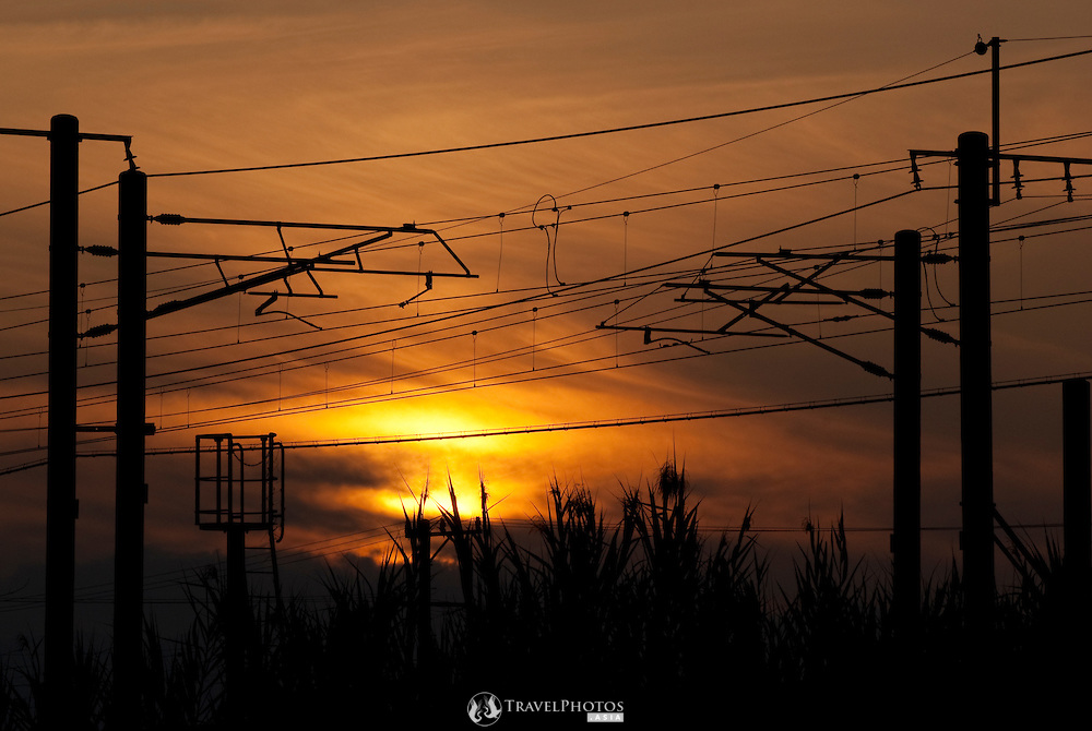 Overhead powerlines for commuter trains and reeds silhouetted by a setting sun