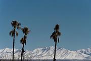Wildlife photography from Benson, Arizona, USA