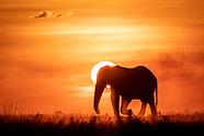 Chobe Sunsets