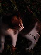 Retrato de tardes y gatos / Panamá.