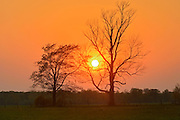 Trees at sunset on the Bruce Peninsula<br /> Ferndale<br /> Ontario<br /> Canada