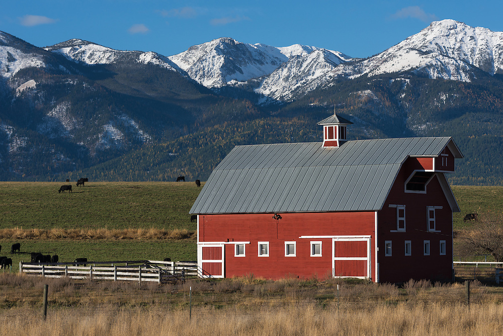 Barn and grazing cows on a farm in Oregon's Wallowa Valley.