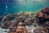 Marine Field Guide