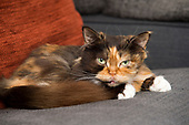 Sunday Express - Pickle The Cat 2021