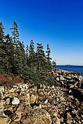 Roacky coast at Ship Harbor, Acadia NP, Maine, ME, USA