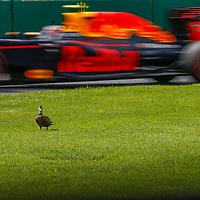 March 2016 // 2016 Formula One, Australian grand prix, Melbourne, Victoria.