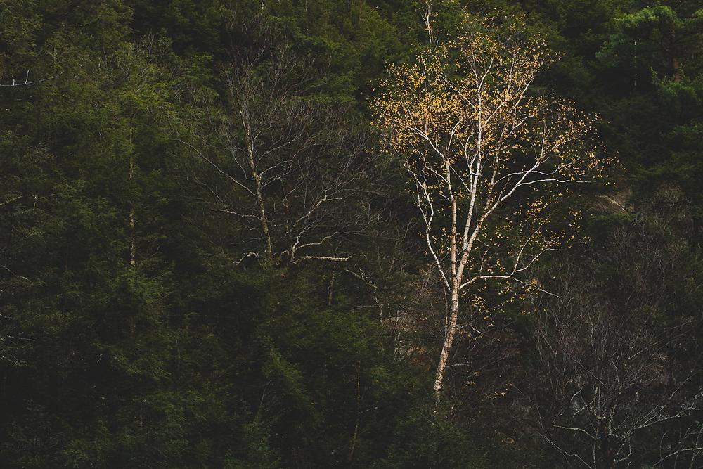 Bash Bish Falls - The Berkshires, MA.
