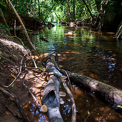 """""""Córrego (rio) fotografado em Cariacica, Espírito Santo -  Sudeste do Brasil. Bioma Mata Atlântica. Registro feito em 2012.<br /> <br /> <br /> <br /> ENGLISH: Stream photographed in the city of Cariacica, Espírito Santo - Southeast of Brazil. Atlantic Forest Biome. Picture made in 2012."""""""