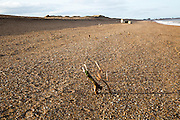 Historic wooden post structure on shingle beach at East Lane, Bawdsey, Suffolk, England, UK