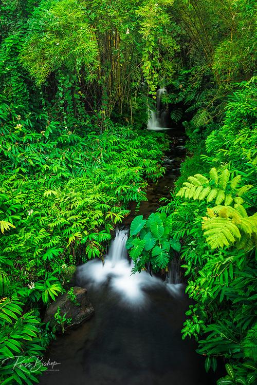 Jungle stream, Akaka Falls State Park, The Big Island, Hawaii USA