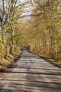 Country road winding into distance between avenue of beech trees, Yatesbury, Wiltshire, England, UK