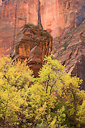 The Virgin River in the Temple of Sinawava, Zion National Park, Utah.