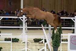 090, Django Ste Hermelle<br /> BWP Hengsten keuring Koningshooikt 2015<br /> © Hippo Foto - Dirk Caremans<br /> 23/01/16