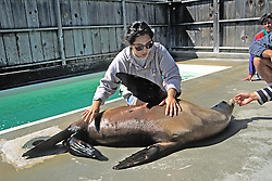 Working With Seal Lion