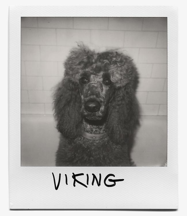 Farewell to New York: Viking (VikingRedGrave)