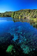 New Zealand, South Island, Takaka Valley, Takaka, Waikoropupu Springs