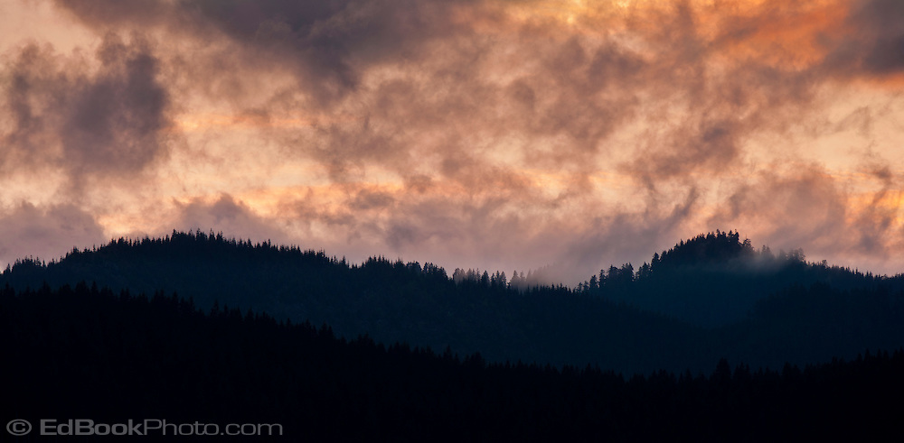 Forested ridges in the Olympic National Forest lie below an evening sky with  alpenglow colored clouds, Olympic Peninsula, Washington, USA pan