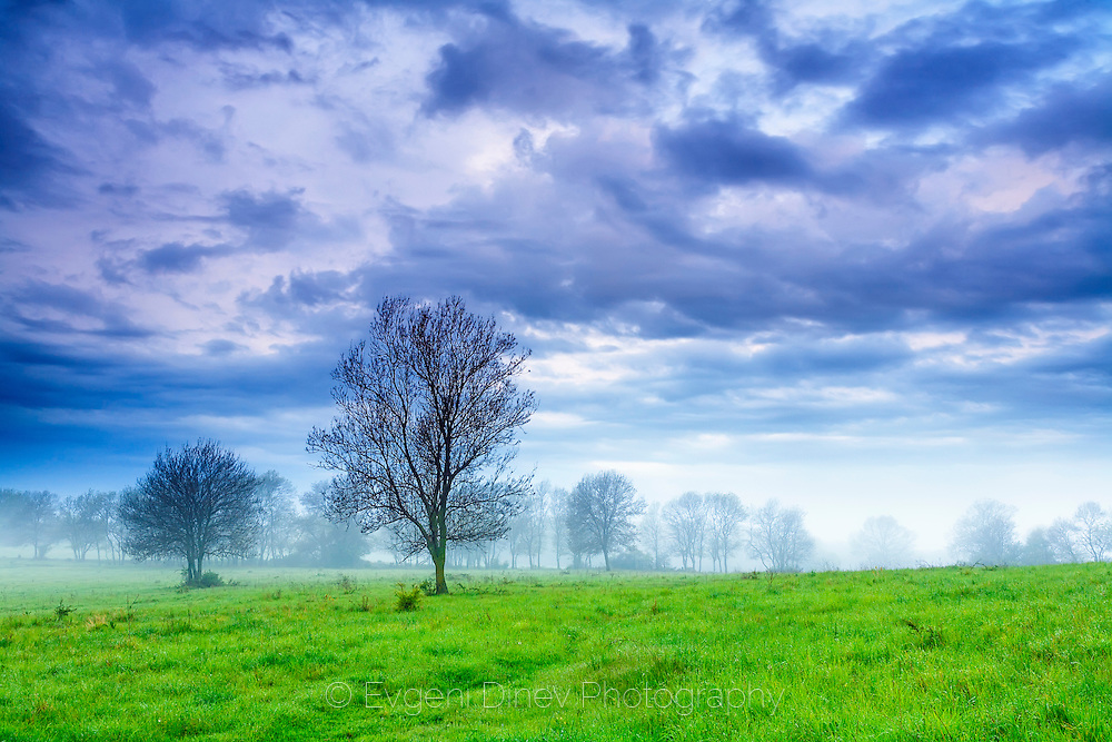 Extraordinary scene of a misty green meadow at spring