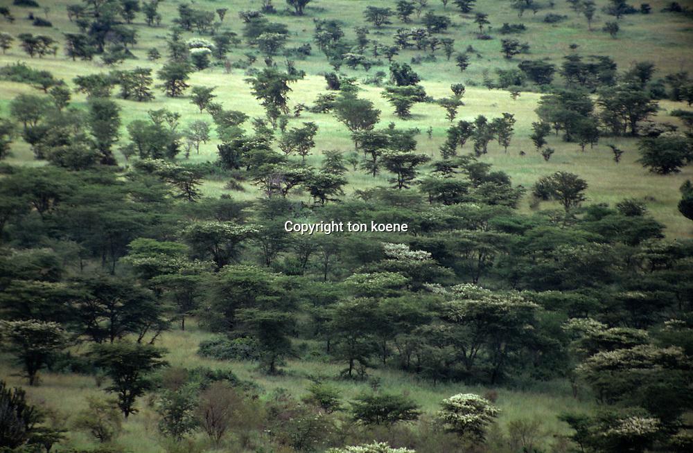 wildlife in Ugandan natural reserve