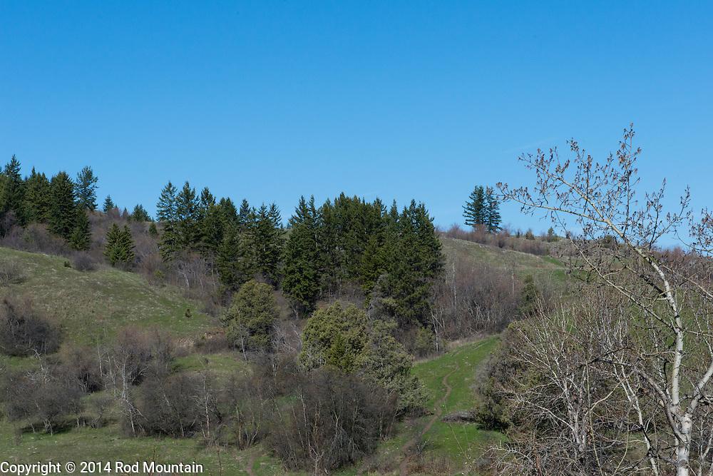 Beautiful Okanagan hillside under blue skies.