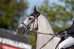 Philippaerts Thibault, BEL, Laurier<br /> Belgisch Kampioenschap Jeugd Azelhof - Lier 2020<br /> © Hippo Foto - Dirk Caremans<br />  30/07/2020