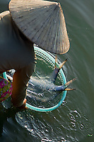 Woman wearing a conical hat washing fish in the river at the Hoi An fish market.