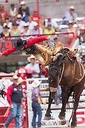 Bareback rider Joe Lufkin is thrown from his bronco during the Bareback Championships at the Cheyenne Frontier Days rodeo in Frontier Park Arena July 26, 2015 in Cheyenne, Wyoming. Frontier Days celebrates the cowboy traditions of the west with a rodeo, parade and fair.