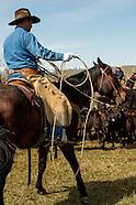 Brandings-Lazy SR Ranch-Wilsall Montana
