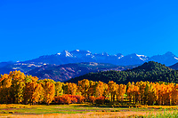 Fall color, Ridgway, Colorado USA.
