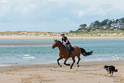 © Licensed to London News Pictures. 29/07/2021. Borth, Ceredigio, Wales, UK. Horses and dogs get exercised on Borth beach in Ceredigion, Wales, UK. Photo credit: Graham M. Lawrence/LNP