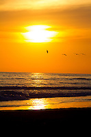 Seagulls in sunset Cost Rica